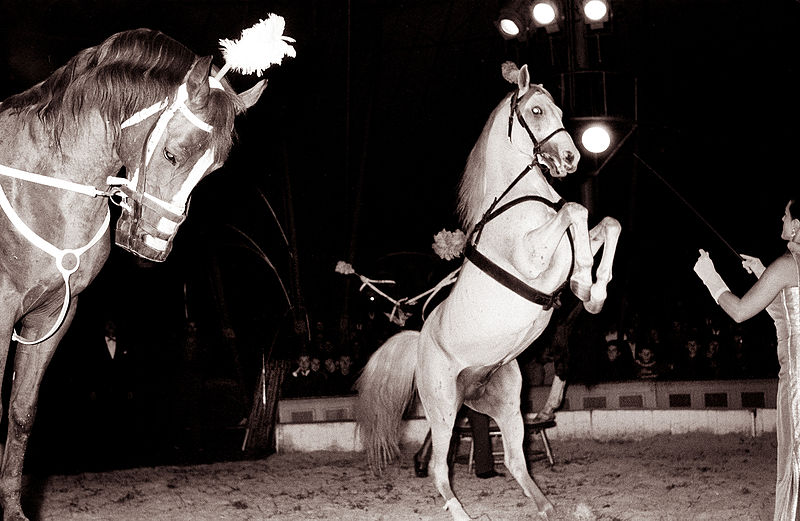 Quelle: https://commons.wikimedia.org/wiki/Category:Circus_horse_dressage
